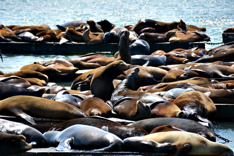 San Francisco, Pier 39, www.diefernwehfamilie.de