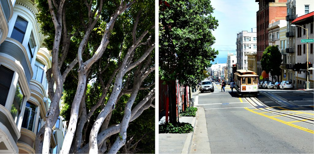 Streets of San Franciscos