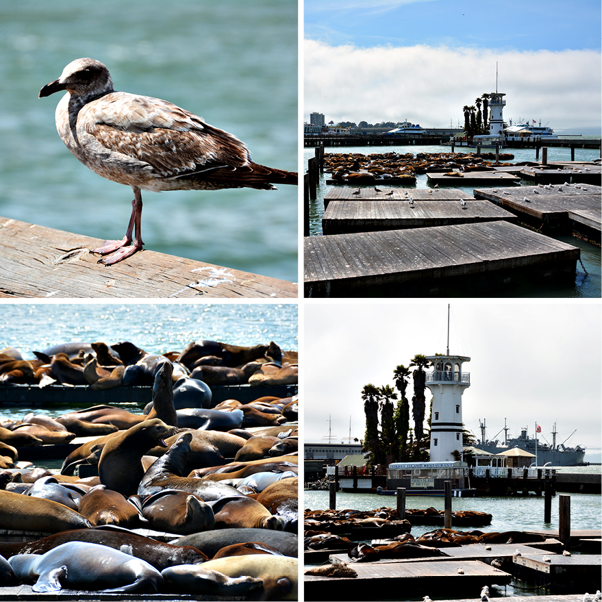 pier 66, san Francisco, www.diefernwehfamilie.de
